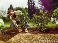 Nederlanders willen groene tuin (80%), maar hebben tegels